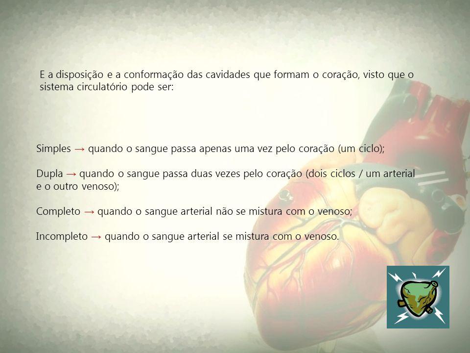 Simples quando o sangue passa apenas uma vez pelo coração (um ciclo); Dupla quando o sangue passa duas vezes pelo coração (dois ciclos / um arterial e