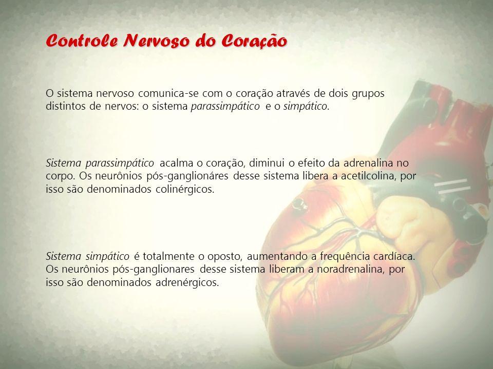 Controle Nervoso do Coração O sistema nervoso comunica-se com o coração através de dois grupos distintos de nervos: o sistema parassimpático e o simpá