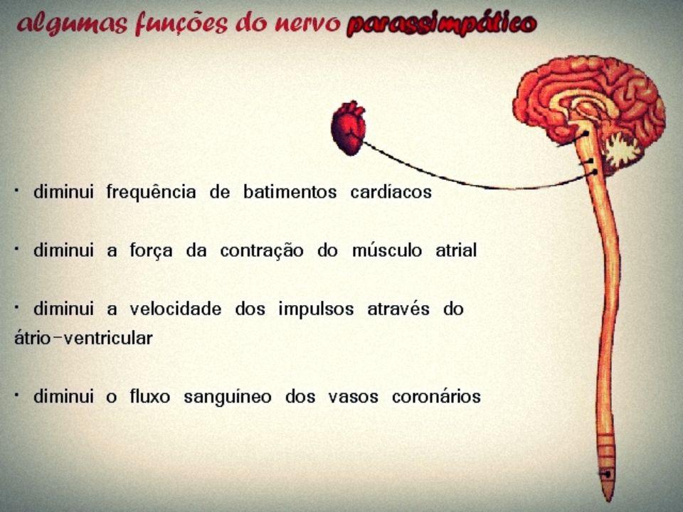 Insuficiência Cardíaca – Ocorre quando uma das partes do coração não bombeia mais o sangue de forma eficaz.