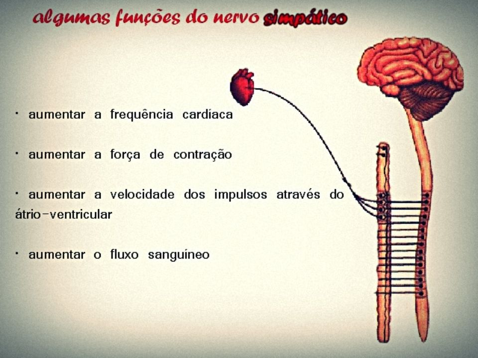 Peixes – a circulação é simples e completa, o coração é dividido em duas cavidades (um átrio e um ventrículo); Exemplos Anfíbios e répteis (exceto os crocodilianos) – a circulação é dupla e incompleta, o coração é subdividido em três cavidades (dois átrios e um ventrículo), contudo em alguns répteis o ventrículo apresenta uma parcial separação denominada Septo de Sabatier;