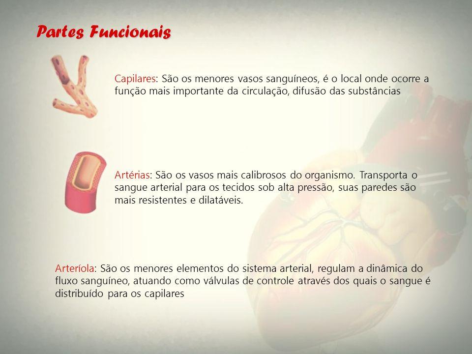 Arteríola: São os menores elementos do sistema arterial, regulam a dinâmica do fluxo sanguíneo, atuando como válvulas de controle através dos quais o