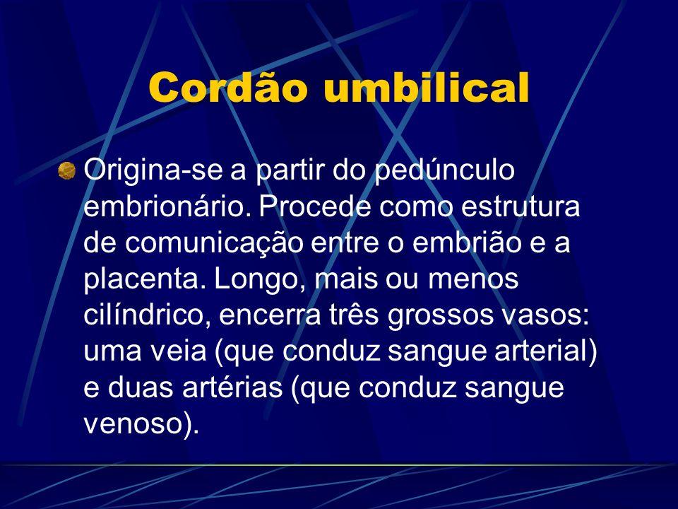Cordão umbilical Origina-se a partir do pedúnculo embrionário. Procede como estrutura de comunicação entre o embrião e a placenta. Longo, mais ou meno