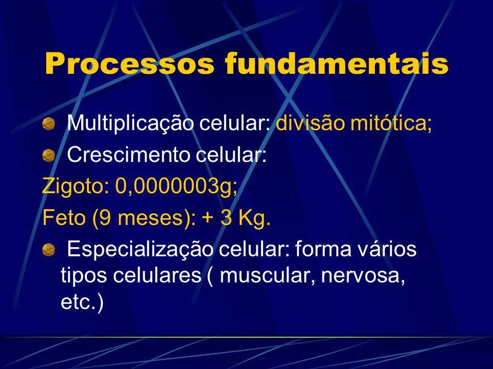 Processos fundamentais Multiplicação celular: divisão mitótica; Crescimento celular: Zigoto: 0,0000003g; Feto (9 meses): + 3 Kg. Especialização celula