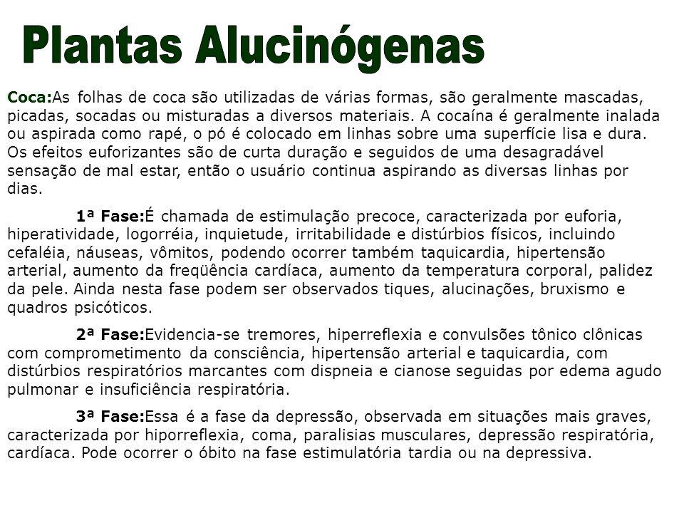 Coca:As folhas de coca são utilizadas de várias formas, são geralmente mascadas, picadas, socadas ou misturadas a diversos materiais. A cocaína é gera