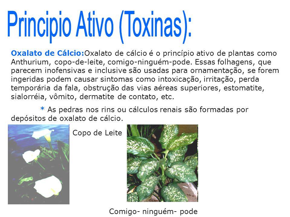 Oxalato de Cálcio:Oxalato de cálcio é o princípio ativo de plantas como Anthurium, copo-de-leite, comigo-ninguém-pode. Essas folhagens, que parecem in