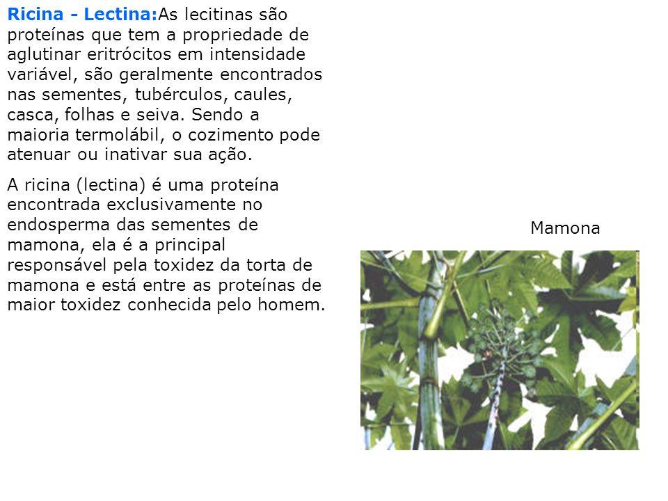 Ricina - Lectina:As lecitinas são proteínas que tem a propriedade de aglutinar eritrócitos em intensidade variável, são geralmente encontrados nas sem