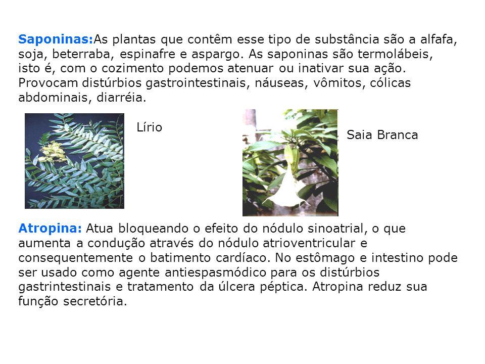 Saponinas:As plantas que contêm esse tipo de substância são a alfafa, soja, beterraba, espinafre e aspargo. As saponinas são termolábeis, isto é, com