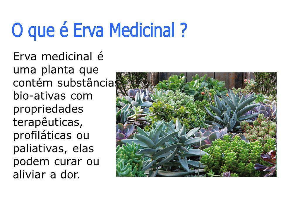 Erva medicinal é uma planta que contém substâncias bio-ativas com propriedades terapêuticas, profiláticas ou paliativas, elas podem curar ou aliviar a