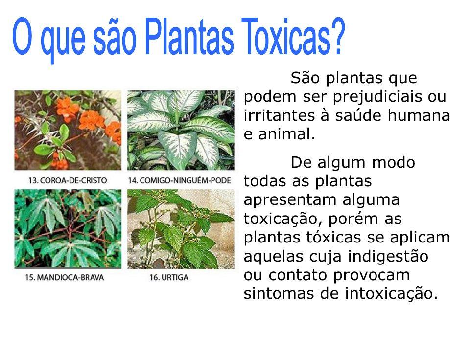São plantas que podem ser prejudiciais ou irritantes à saúde humana e animal. De algum modo todas as plantas apresentam alguma toxicação, porém as pla