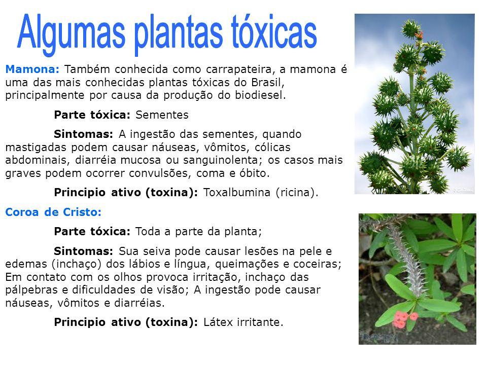 Mamona: Também conhecida como carrapateira, a mamona é uma das mais conhecidas plantas tóxicas do Brasil, principalmente por causa da produção do biod