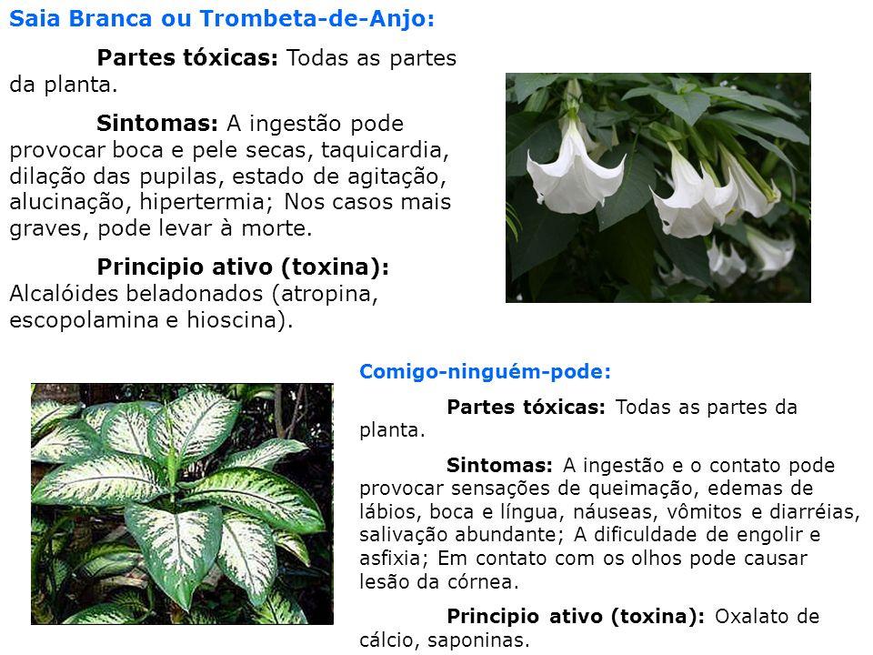 Comigo-ninguém-pode: Partes tóxicas: Todas as partes da planta. Sintomas: A ingestão e o contato pode provocar sensações de queimação, edemas de lábio