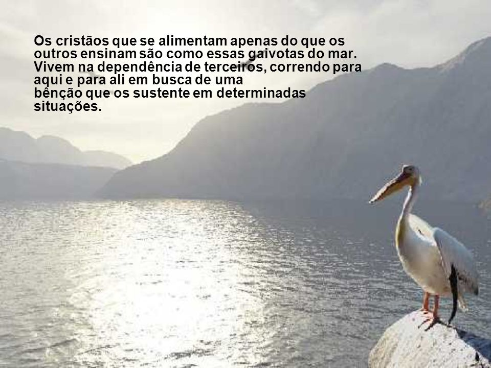 As gaivotas não seguiram os pescadores e, porque estavam acostumadas a viver daquilo que eles lhes davam, sem jamais ter aprendido a alimentar-se por