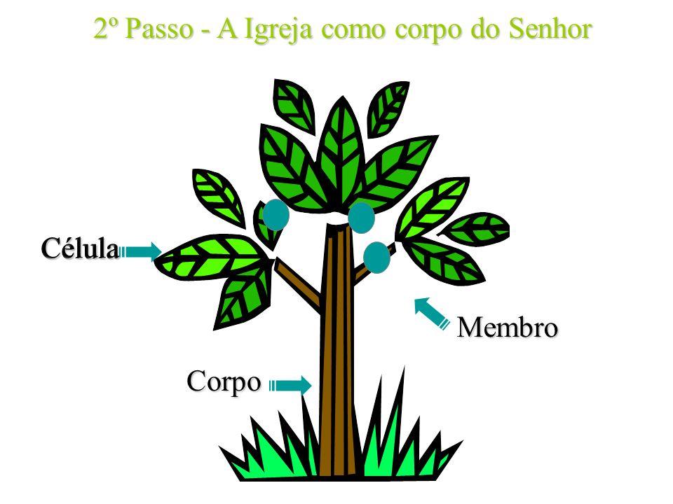 2º Passo - A Igreja como corpo do Senhor Membro Corpo Célula Célula