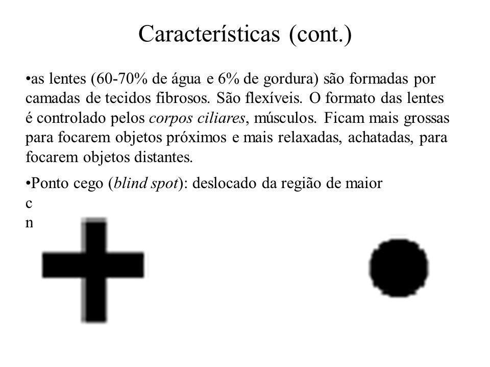 Cones e Bastonetes O olho humano percebe cor através do processo de tricomacia