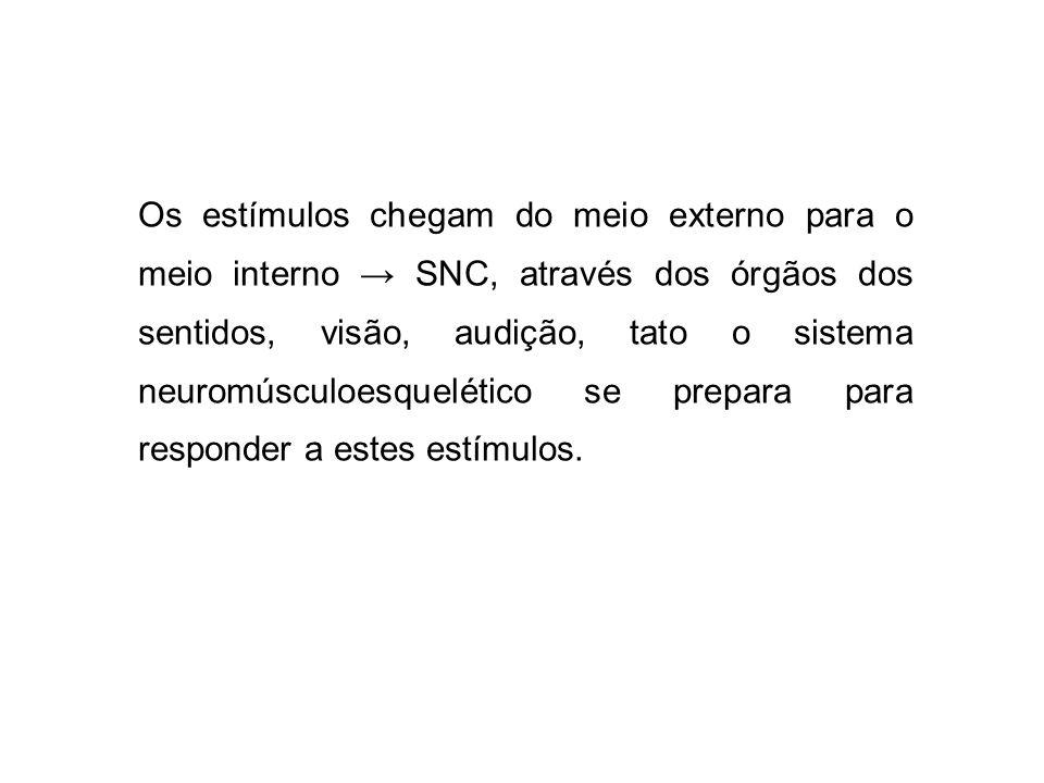 Os estímulos chegam do meio externo para o meio interno SNC, através dos órgãos dos sentidos, visão, audição, tato o sistema neuromúsculoesquelético s