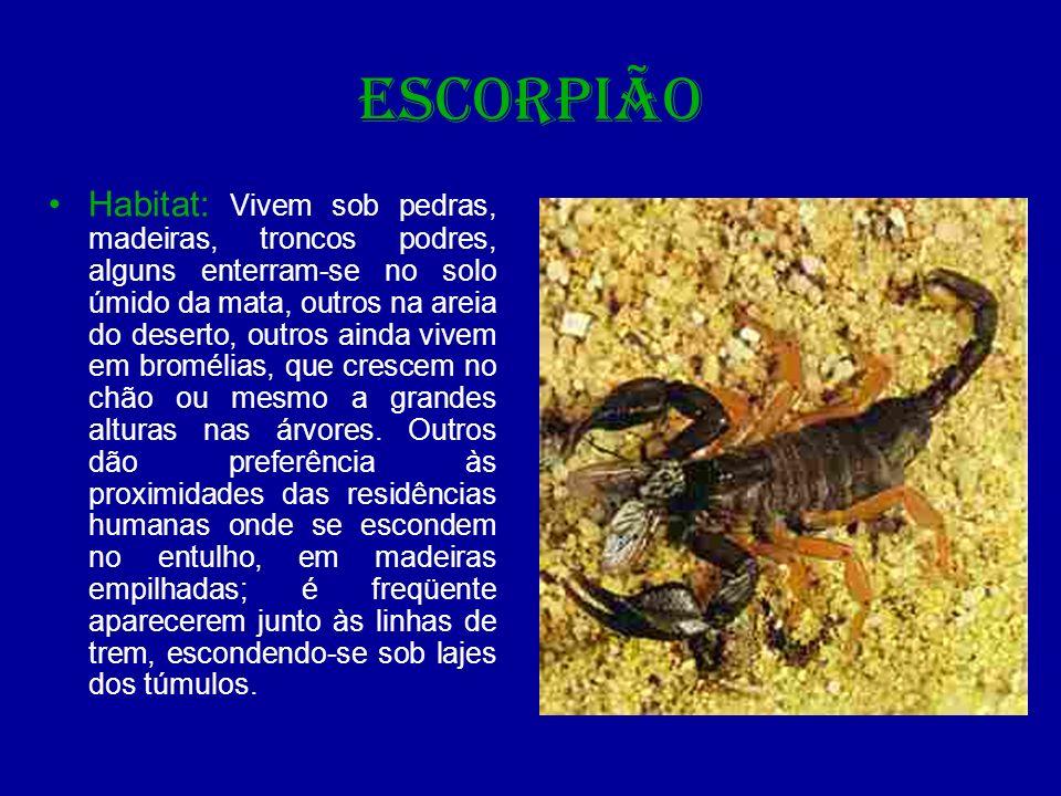 ESCORPIÃO Alimentação: Os escorpiões são predadores de insetos, como baratas, grilos, cupins, etc.