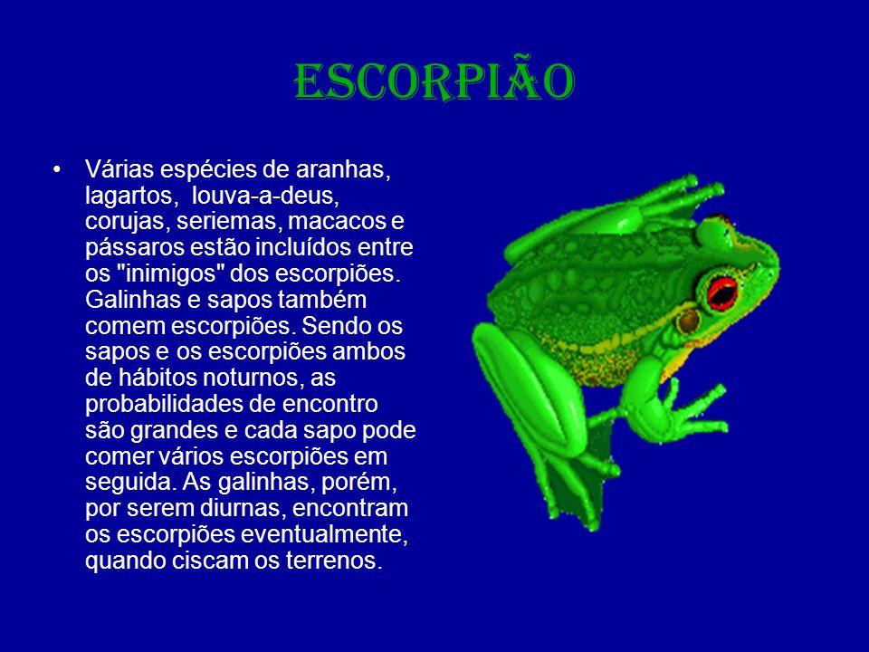 ESCORPIÃO O ferrão do escorpião fica localizado na extremidade do metassoma, conhecida como cauda , embora não seja propriamente uma cauda, e sim a parte final do abdômen.