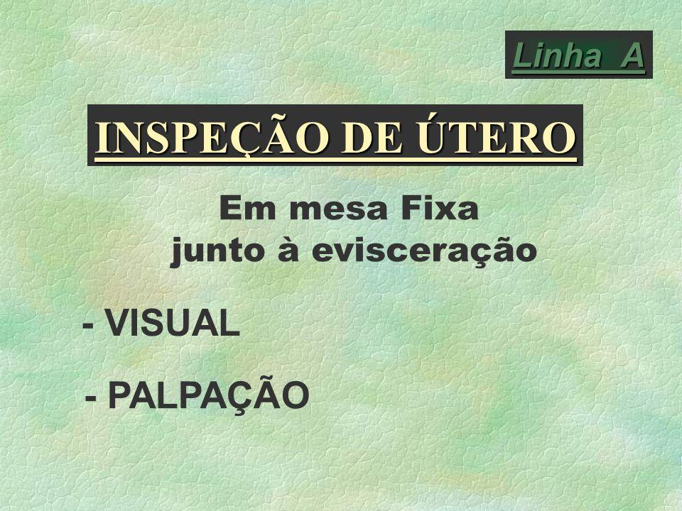 Linha A INSPEÇÃO DE ÚTERO Em mesa Fixa junto à evisceração - VISUAL - PALPAÇÃO