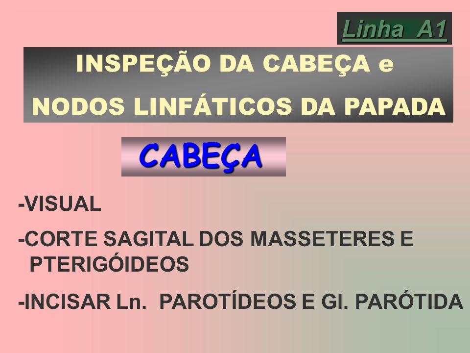 Linha A1 INSPEÇÃO DA CABEÇA e NODOS LINFÁTICOS DA PAPADA -VISUAL -CORTE SAGITAL DOS MASSETERES E PTERIGÓIDEOS -INCISAR Ln. PAROTÍDEOS E Gl. PARÓTIDACA