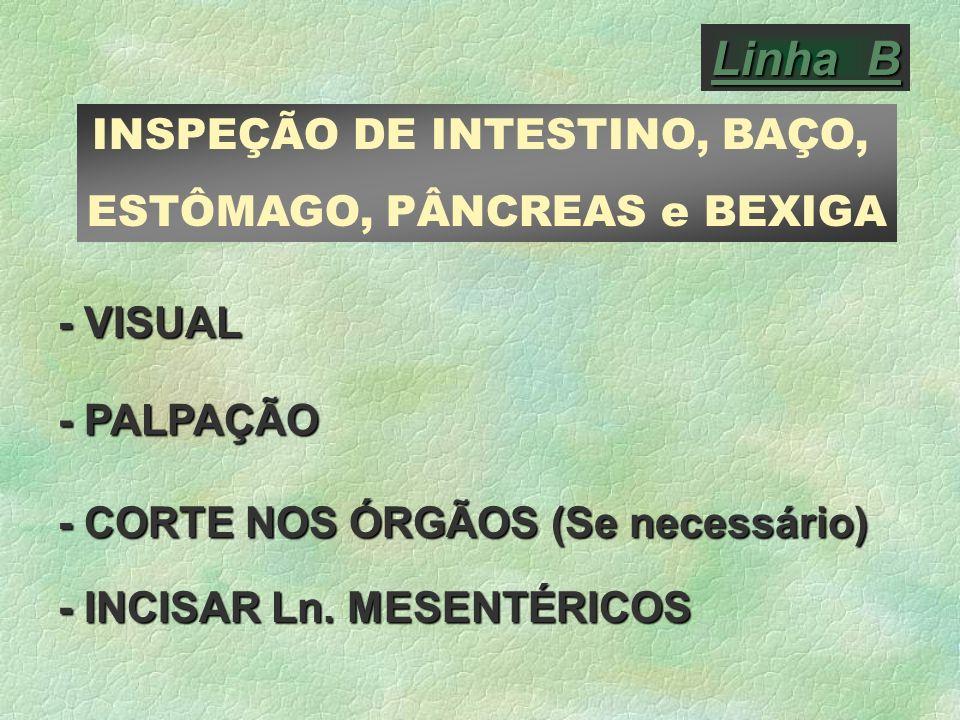 Linha B INSPEÇÃO DE INTESTINO, BAÇO, ESTÔMAGO, PÂNCREAS e BEXIGA - VISUAL - PALPAÇÃO - CORTE NOS ÓRGÃOS (Se necessário) - INCISAR Ln. MESENTÉRICOS
