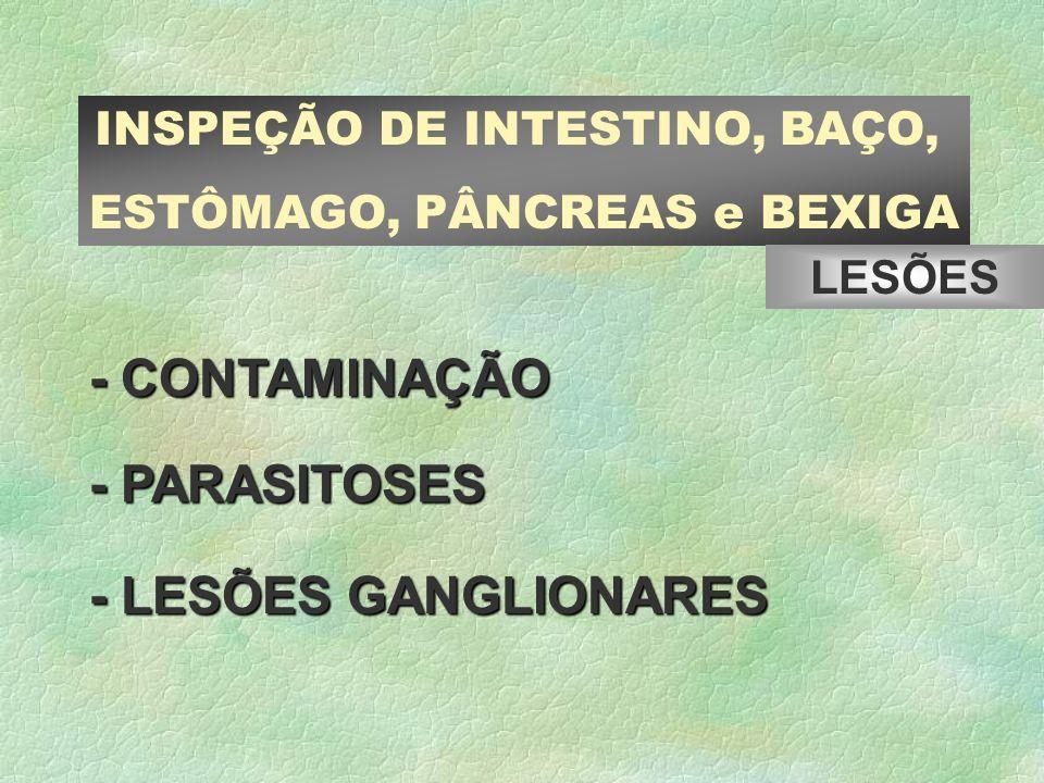 -CONTAMINAÇÃO - CONTAMINAÇÃO -PARASITOSES - PARASITOSES - LESÕES GANGLIONARES INSPEÇÃO DE INTESTINO, BAÇO, ESTÔMAGO, PÂNCREAS e BEXIGA LESÕES