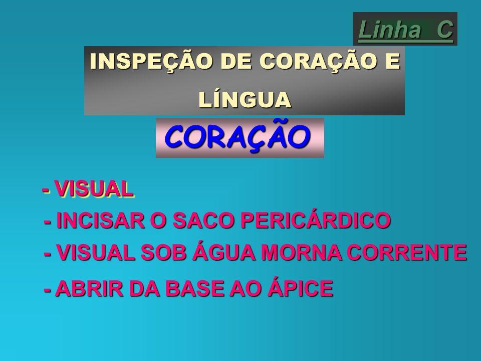 Linha C INSPEÇÃO DE CORAÇÃO E LÍNGUACORAÇÃO - VISUAL - INCISAR O SACO PERICÁRDICO - VISUAL SOB ÁGUA MORNA CORRENTE - ABRIR DA BASE AO ÁPICE