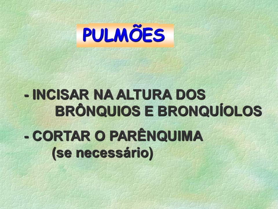 PULMÕES - INCISAR NA ALTURA DOS BRÔNQUIOS E BRONQUÍOLOS BRÔNQUIOS E BRONQUÍOLOS - CORTAR O PARÊNQUIMA (se necessário)
