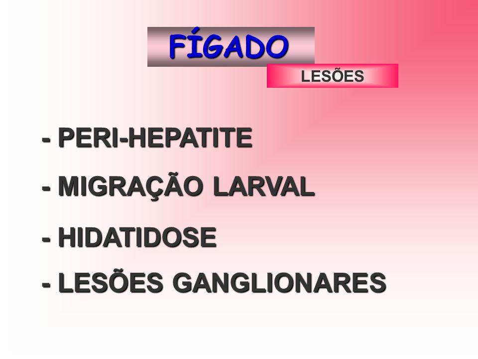 FÍGADO - PERI-HEPATITE -MIGRAÇÃO LARVAL - MIGRAÇÃO LARVAL - LESÕES GANGLIONARES - HIDATIDOSE LESÕES