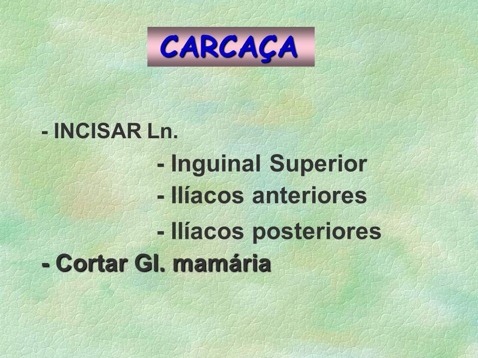 CARCAÇA - INCISAR Ln. - Inguinal Superior - Ilíacos anteriores - Ilíacos posteriores - Cortar Gl. mamária