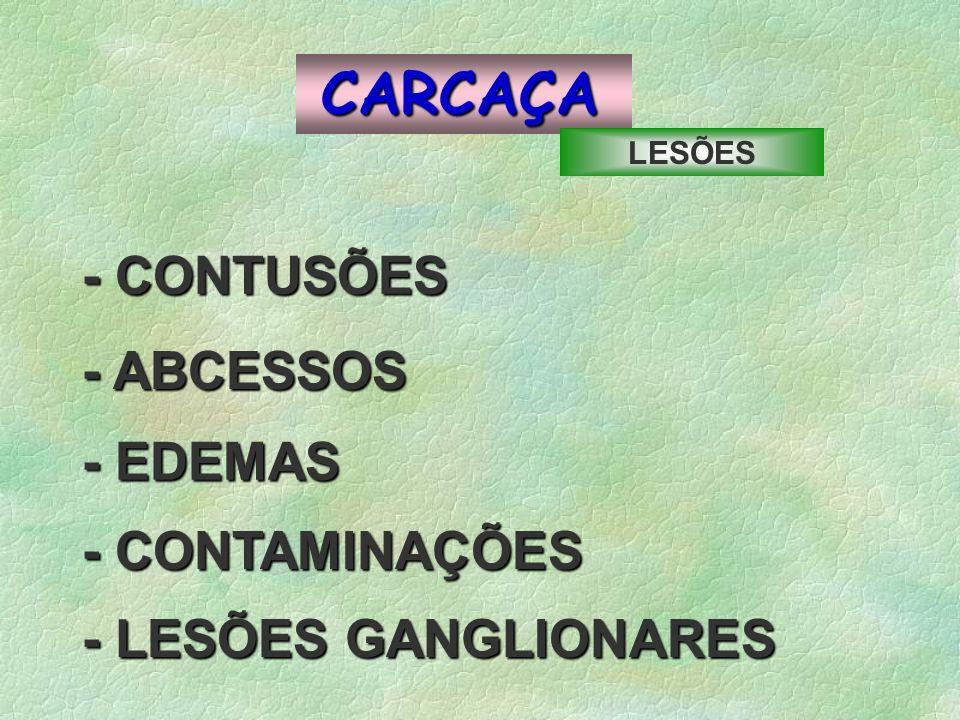 CARCAÇA - CONTUSÕES -ABCESSOS - ABCESSOS - CONTAMINAÇÕES - EDEMAS - LESÕES GANGLIONARES LESÕES