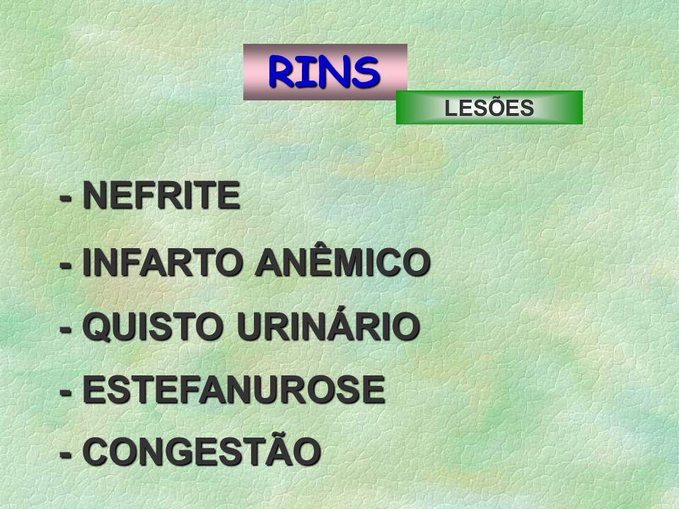 RINS - NEFRITE -INFARTO ANÊMICO - INFARTO ANÊMICO - ESTEFANUROSE - QUISTO URINÁRIO - CONGESTÃO LESÕES