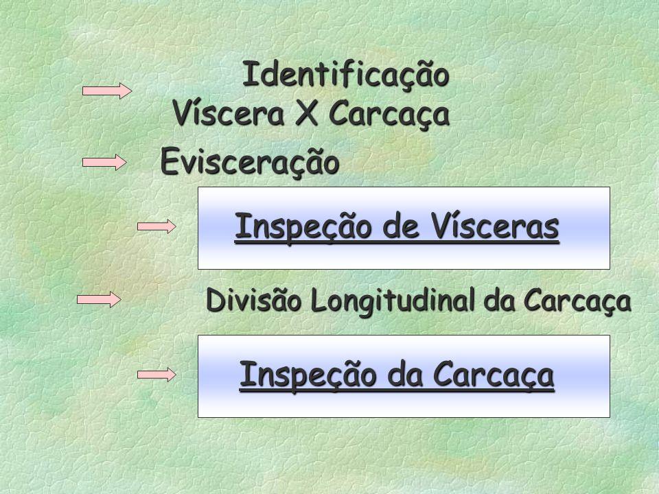Identificação Identificação Víscera X Carcaça Evisceração Evisceração Inspeção de Vísceras Inspeção de Vísceras Divisão Longitudinal da Carcaça Divisã