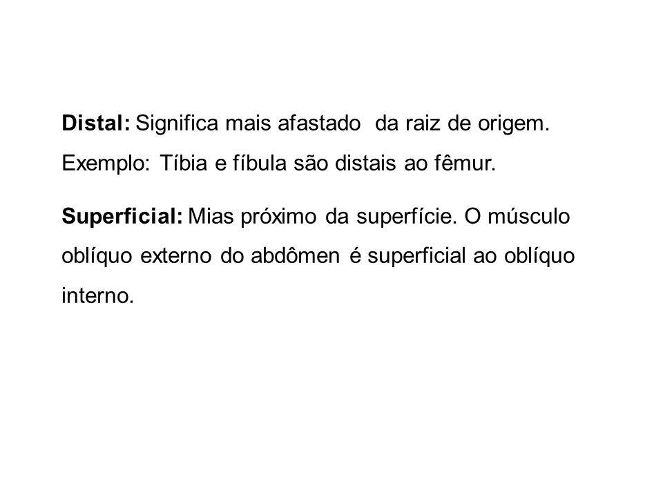 Distal: Significa mais afastado da raiz de origem. Exemplo: Tíbia e fíbula são distais ao fêmur. Superficial: Mias próximo da superfície. O músculo ob