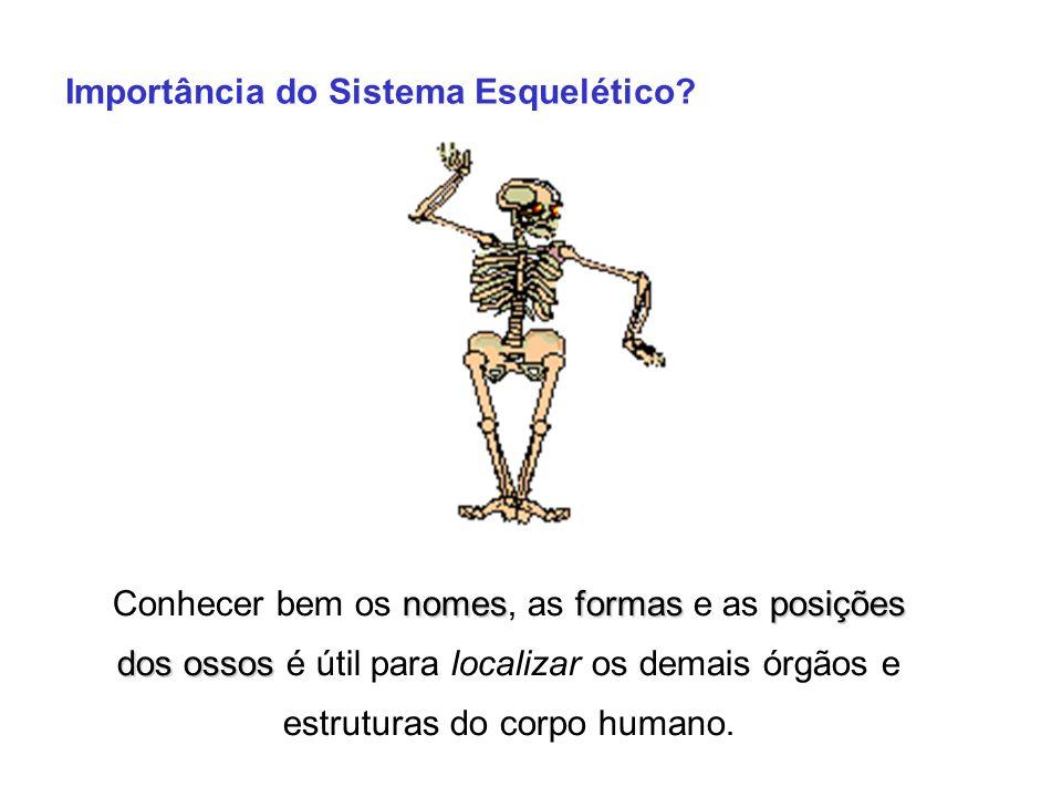 Importância do Sistema Esquelético? nomesformasposições dos ossos Conhecer bem os nomes, as formas e as posições dos ossos é útil para localizar os de