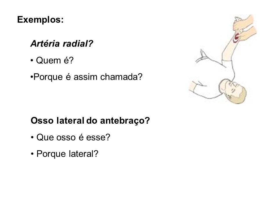 Exemplos: Artéria radial? Quem é? Porque é assim chamada? Osso lateral do antebraço? Que osso é esse? Porque lateral?