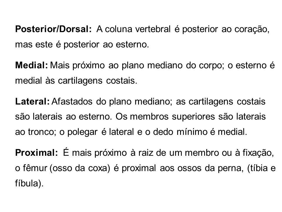 Posterior/Dorsal: A coluna vertebral é posterior ao coração, mas este é posterior ao esterno. Medial: Mais próximo ao plano mediano do corpo; o estern