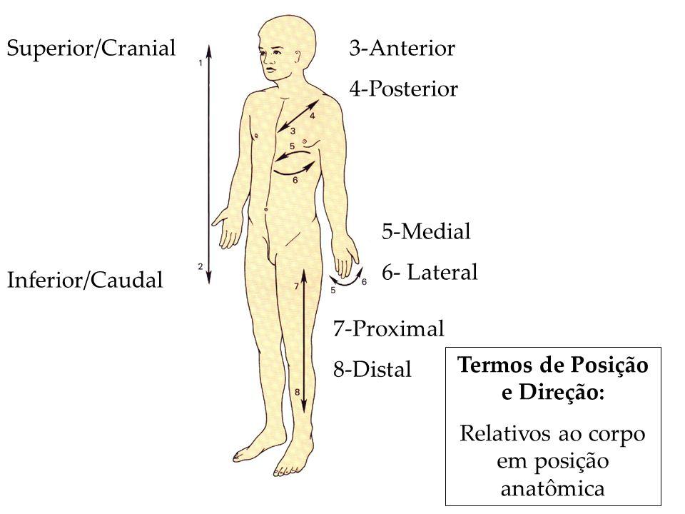 Superior/Cranial Inferior/Caudal 3-Anterior 4-Posterior 5-Medial 6- Lateral 7-Proximal 8-Distal Termos de Posição e Direção: Relativos ao corpo em pos