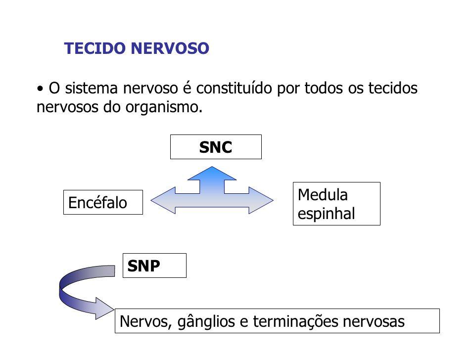 TECIDO NERVOSO O sistema nervoso é constituído por todos os tecidos nervosos do organismo. SNC SNP Encéfalo Medula espinhal Nervos, gânglios e termina