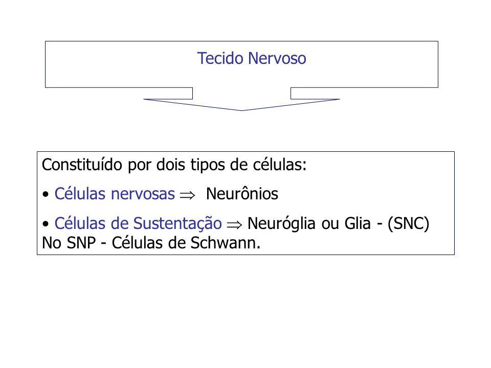 Tecido Nervoso Constituído por dois tipos de células: Células nervosas Neurônios Células de Sustentação Neuróglia ou Glia - (SNC) No SNP - Células de