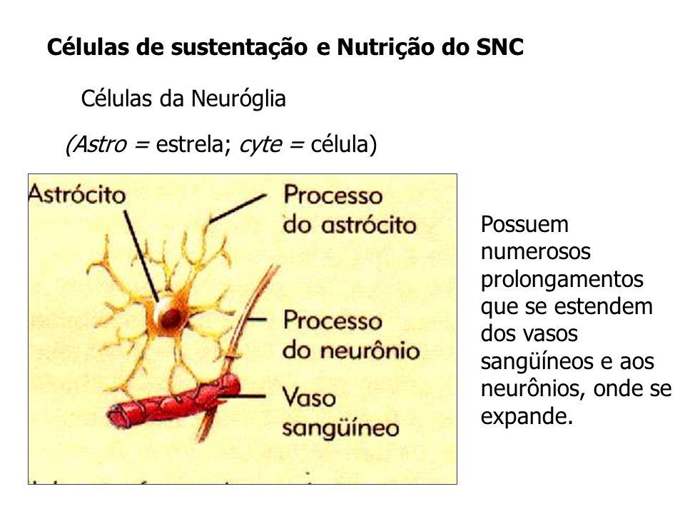 Células de sustentação e Nutrição do SNC Células da Neuróglia Possuem numerosos prolongamentos que se estendem dos vasos sangüíneos e aos neurônios, o