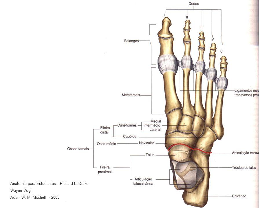 Anatomia para Estudantes – Richard L. Drake Wayne Vogl Adam W. M. Mitchell - 2005