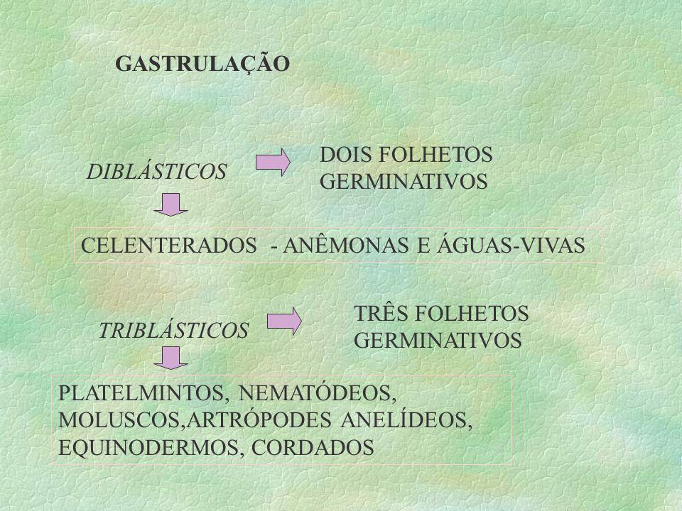 GASTRULAÇÃO DIBLÁSTICOS TRIBLÁSTICOS DOIS FOLHETOS GERMINATIVOS TRÊS FOLHETOS GERMINATIVOS CELENTERADOS - ANÊMONAS E ÁGUAS-VIVAS PLATELMINTOS, NEMATÓD