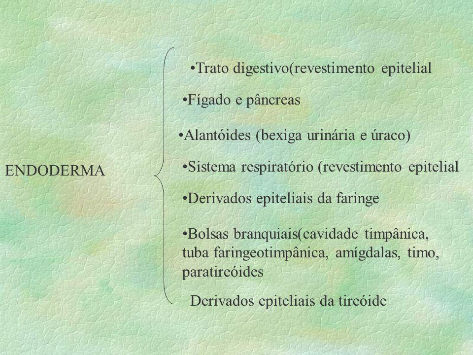 ENDODERMA Trato digestivo(revestimento epitelial Fígado e pâncreas Alantóides (bexiga urinária e úraco) Sistema respiratório (revestimento epitelial D