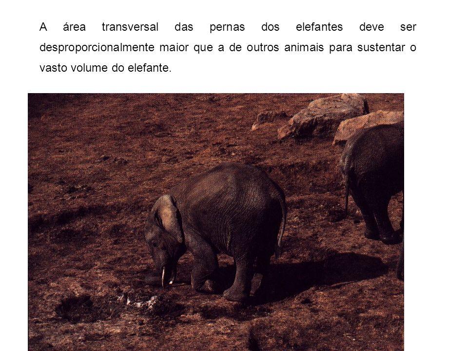 A grande proporção superfície / volume dos animais muito pequenos também podem criar problemas.