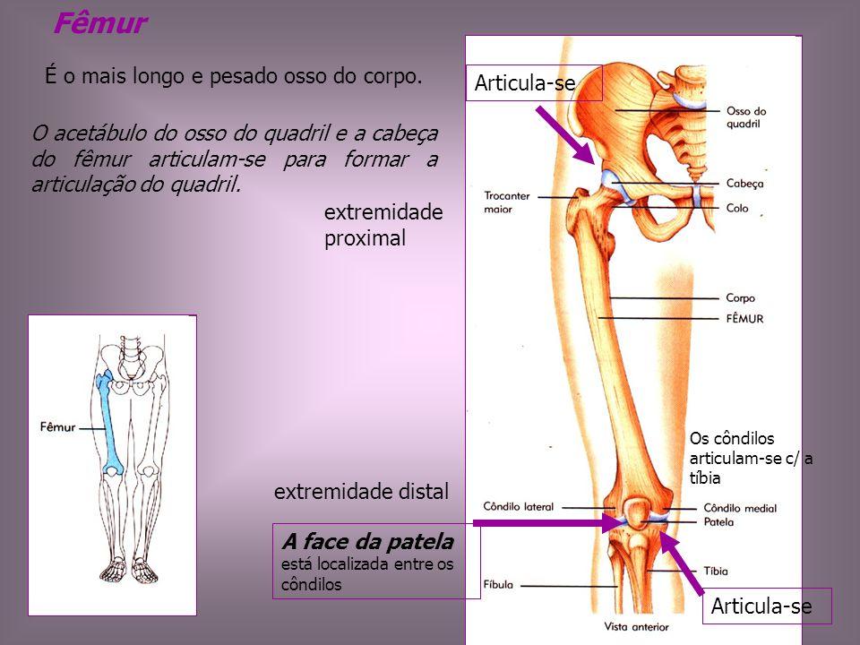 Fêmur O acetábulo do osso do quadril e a cabeça do fêmur articulam-se para formar a articulação do quadril. É o mais longo e pesado osso do corpo. ext