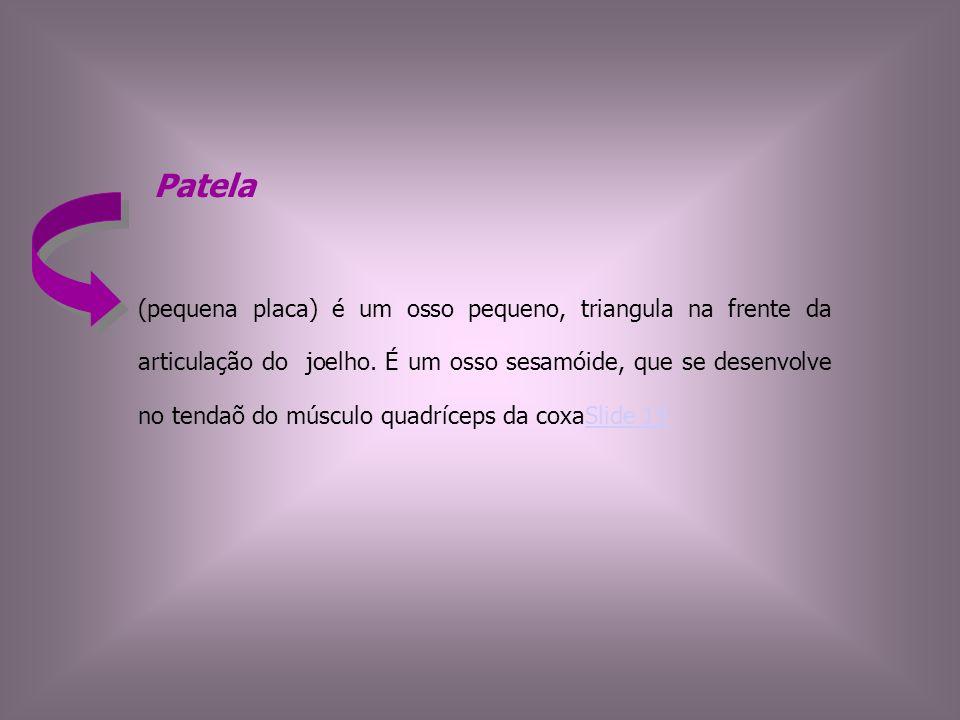 Patela (pequena placa) é um osso pequeno, triangula na frente da articulação do joelho. É um osso sesamóide, que se desenvolve no tendaõ do músculo qu