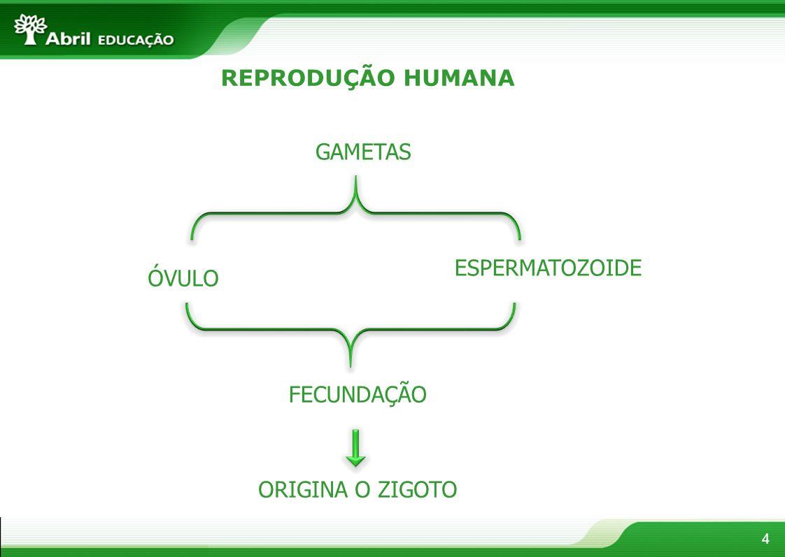 4 REPRODUÇÃO HUMANA GAMETAS ÓVULO ESPERMATOZOIDE FECUNDAÇÃO ORIGINA O ZIGOTO