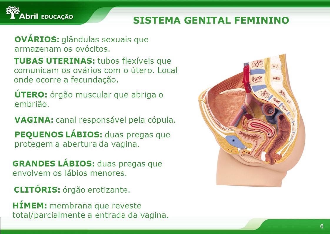 6 SISTEMA GENITAL FEMININO OVÁRIOS: glândulas sexuais que armazenam os ovócitos.
