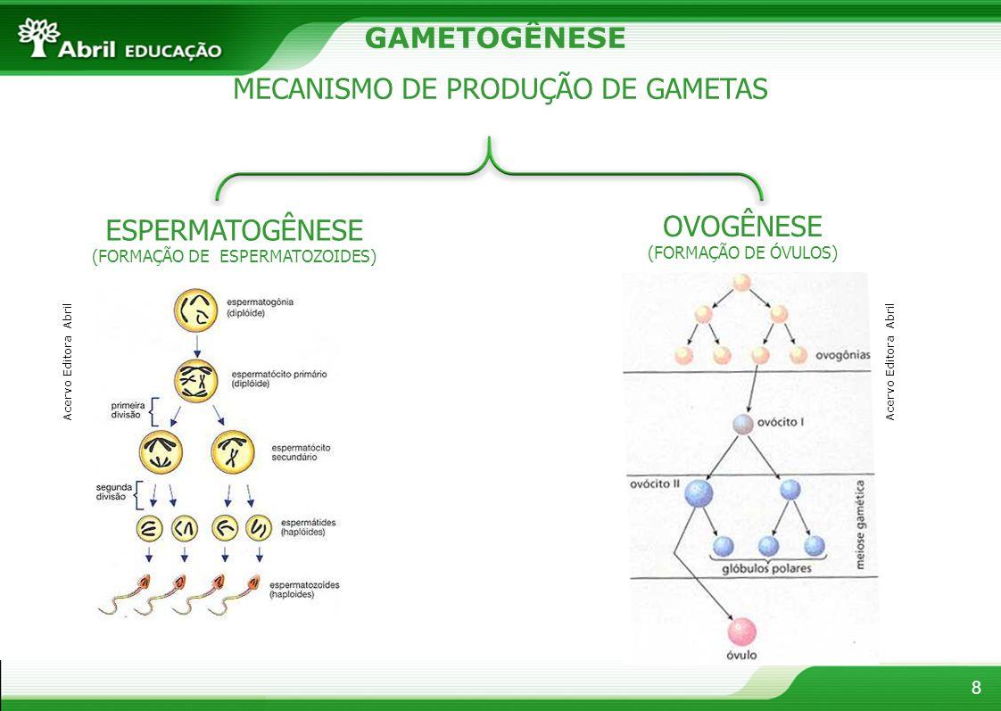 8 GAMETOGÊNESE MECANISMO DE PRODUÇÃO DE GAMETAS ESPERMATOGÊNESE (FORMAÇÃO DE ESPERMATOZOIDES) OVOGÊNESE (FORMAÇÃO DE ÓVULOS) Acervo Editora Abril