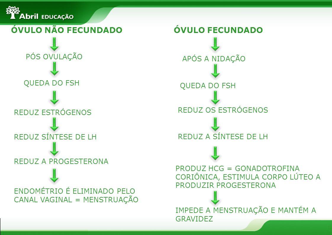 9 ÓVULO NÃO FECUNDADOÓVULO FECUNDADO PÓS OVULAÇÃO QUEDA DO FSH REDUZ ESTRÓGENOS REDUZ SÍNTESE DE LH REDUZ A PROGESTERONA ENDOMÉTRIO É ELIMINADO PELO CANAL VAGINAL = MENSTRUAÇÃO APÓS A NIDAÇÃO QUEDA DO FSH REDUZ OS ESTRÓGENOS REDUZ A SÍNTESE DE LH PRODUZ HCG = GONADOTROFINA CORIÔNICA, ESTIMULA CORPO LÚTEO A PRODUZIR PROGESTERONA IMPEDE A MENSTRUAÇÃO E MANTÉM A GRAVIDEZ